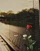 Rose at Viet Nam Wall