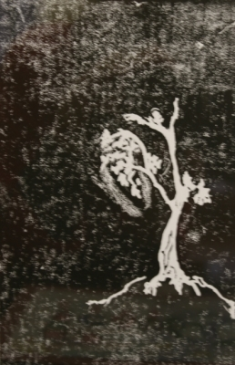 Print of a Tree